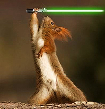 When Animals Go Star Wars On Each Other…