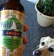 The Beer Fetching Dog: A Mans Best Friend!