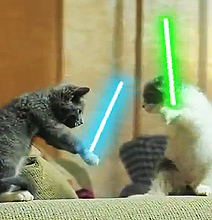 Jedi Cats: Perfectly Normal Cat Behavior [Video]