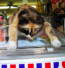 How Cats Cool Down During Hot Summer Days