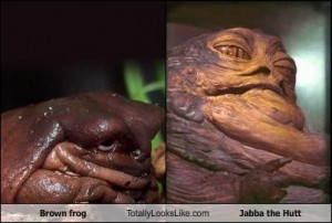brown-frog-totally-looks-like-jabba-the-hutt
