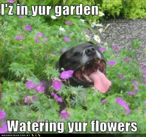 funny-dog-pictures-watering-flowers