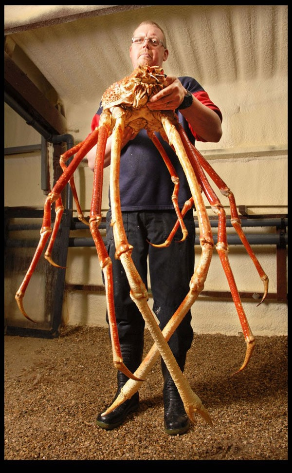 Biggest Crab Ever Caught in the World