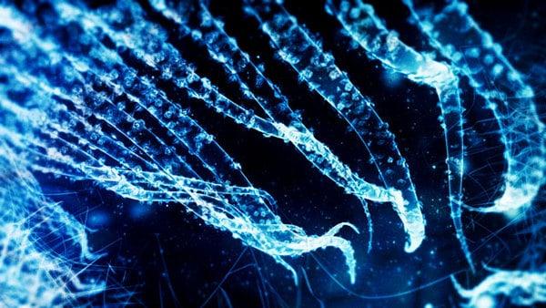 Pororoca – Amazingly Designed & Animated Fiction Sea Organisms