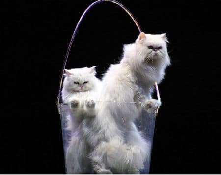 I Love Cats! Purr-fect Photo Inspiration