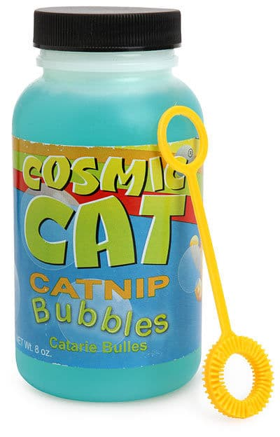 Lure Your Kitten To Play With Bubble Catnip