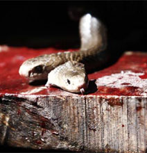 Burgers Made With Killer Snakes – Nom Nom!