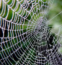Graffiti Art Trend – Spider Web Tagging
