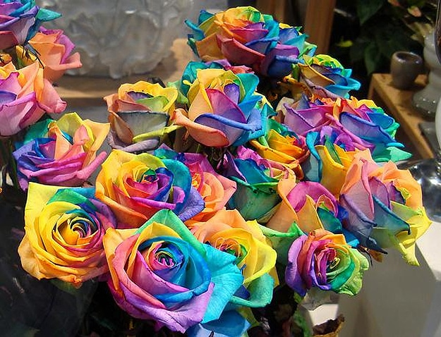 how to grow a rainbow colored rose bit rebels