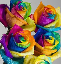 How To: Grow A Rainbow Colored Rose