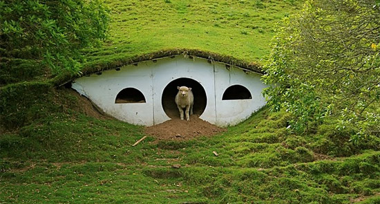 Hobbiton Once Again Populated… By Sheep!