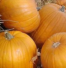 "Halloween Fun: The ""Predator"" Pumpkin Carving"