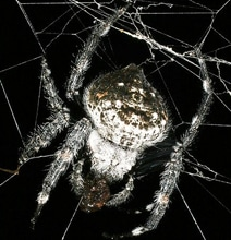 The Creepiest Spider Web You'll Ever See