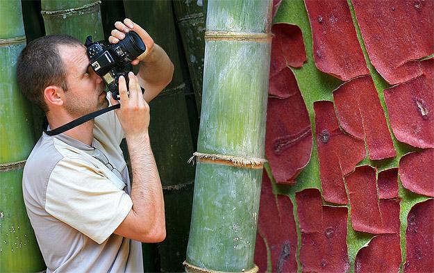 Fascinating Tree Bark From Around The World
