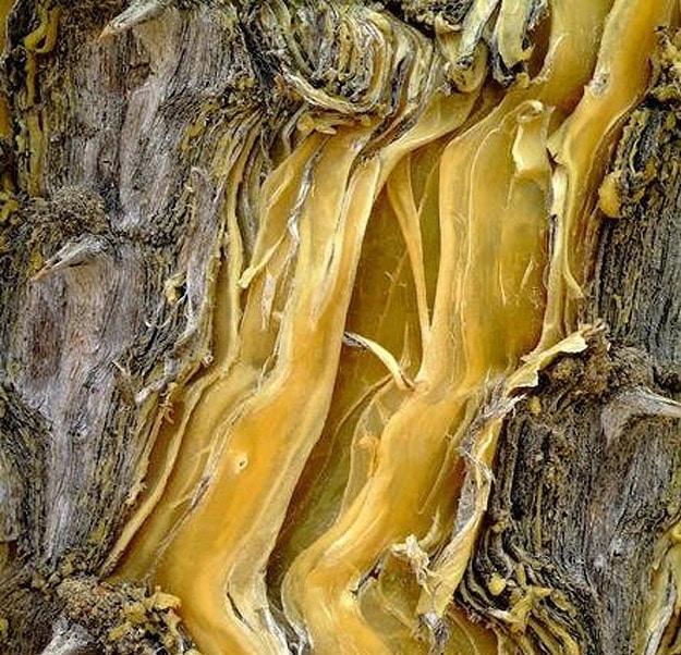 Colorful Tree Bark Around Globe