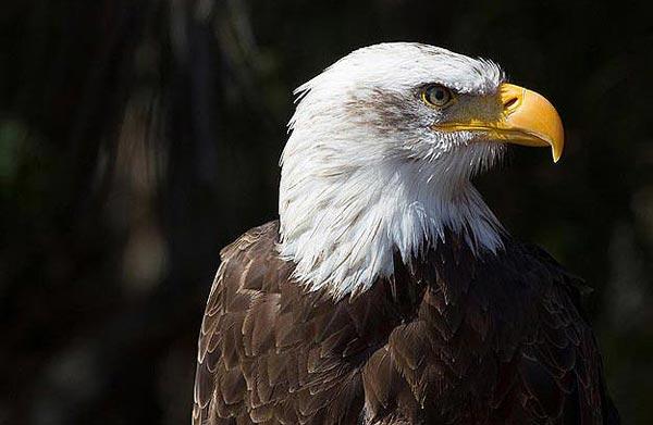 Eagles Don't Flock Twitter Leader