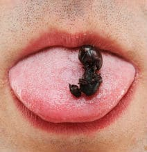 Hungry? Try Edible Giant Toasted Ants!