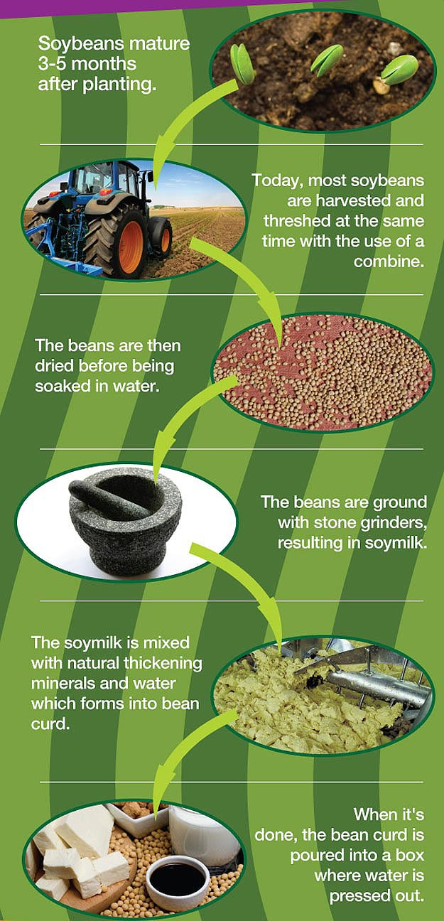 What Is Tofu Infographic