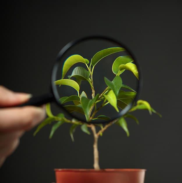 Fashion Wear Planter With Plant