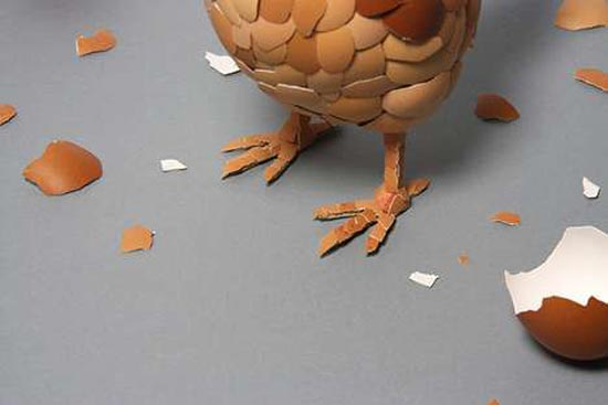 What Came First Chicken Egg