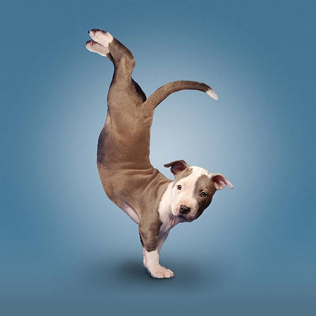 Yoga For Dogs and Cats