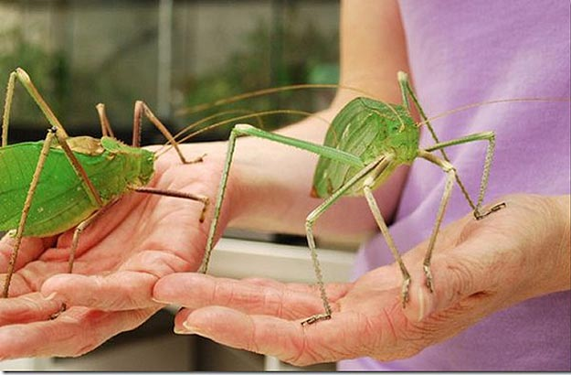 The World's 8 Biggest Baddest Fugliest Bugs