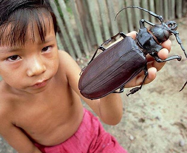 Little Kid Holding Big Bug