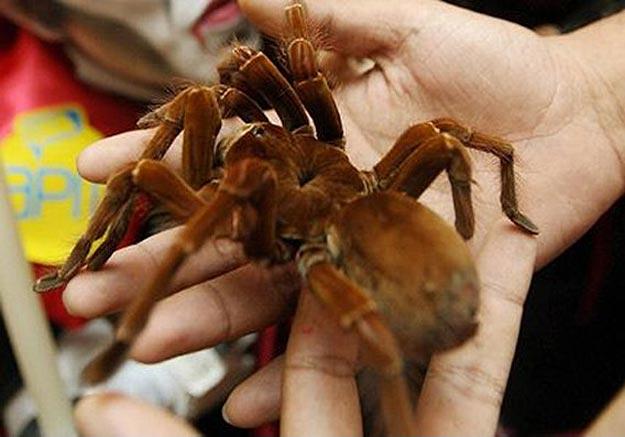 A Huge Gigantic Spider