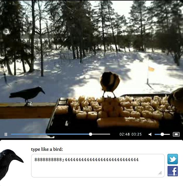 Real Birds Tweet on Twitter