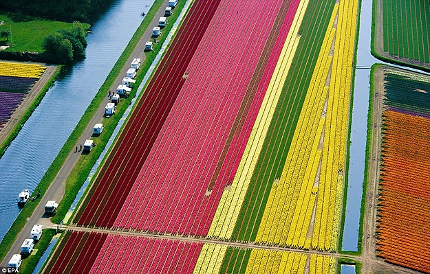 Tulipmania: An Inspiring Field Of 3 Billion Tulips