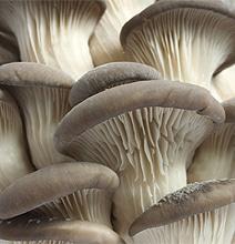 Environment: Mushrooms Break Down Disposable Diapers