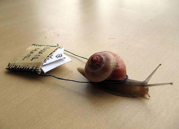 Live Snails Deliver Email