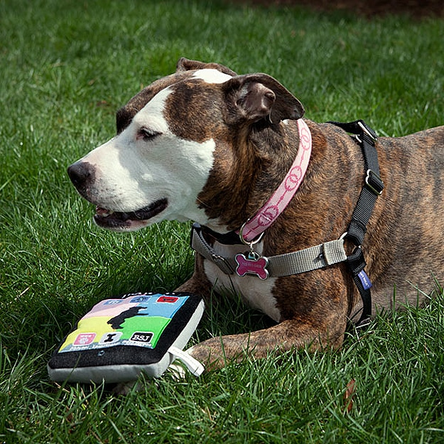 iPaw'd: The iPad Made For Tech Savvy Dogs