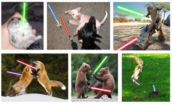 When Animals Go Star Wars On Each Other…