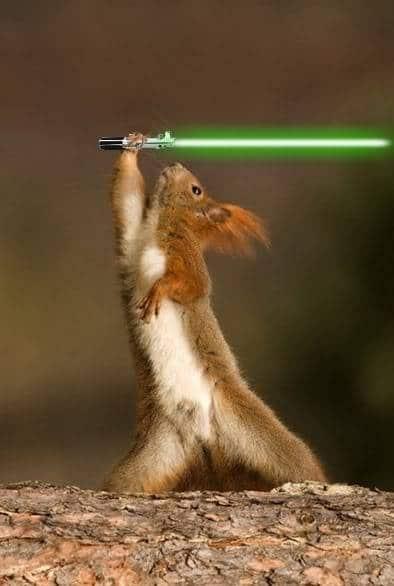 Animal Star Wars Sabre Fights