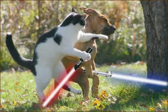 When Animals Go Star Wars On Each Other Bit Rebels