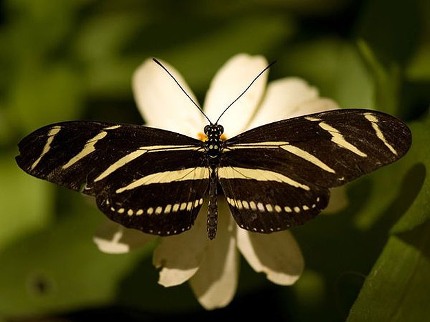 Butterflies Are Nature's Gift