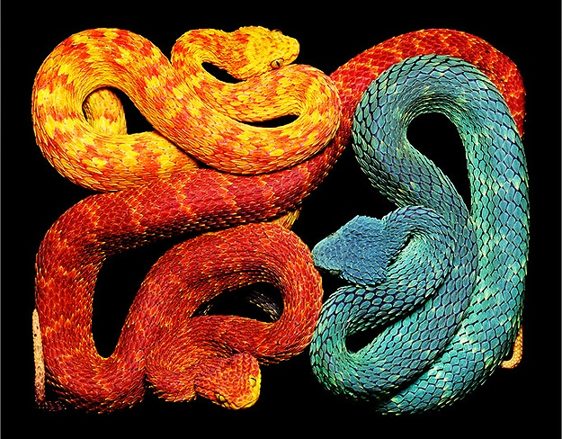 Serpent Still Life Photographs