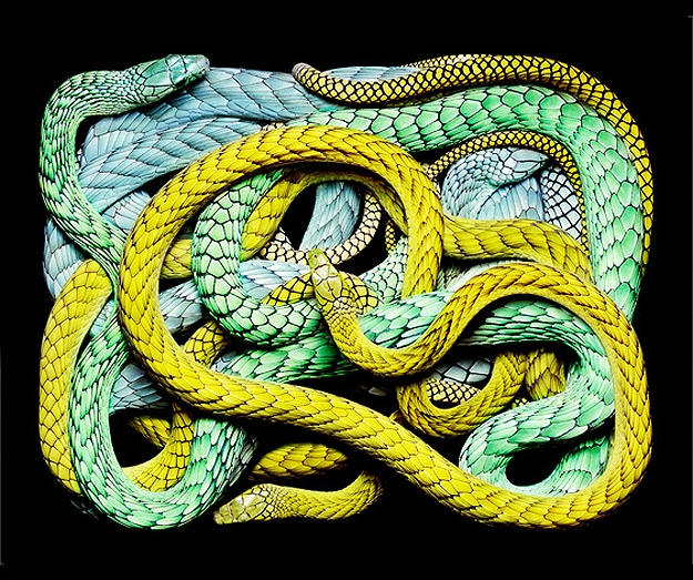 Photography: The Most Beautiful Snakes In The World