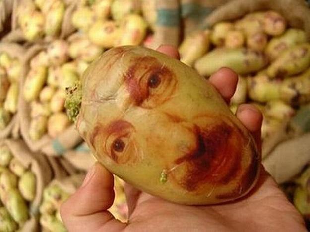 Potato Portraits: The Real Life Potato Heads