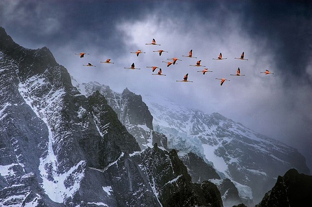 Birds Flying Over A Mountain