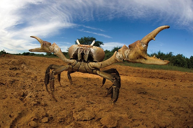Crab Crawling On Sand Photograph