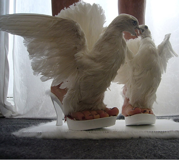 Pigeon Bird Inspired Shoes