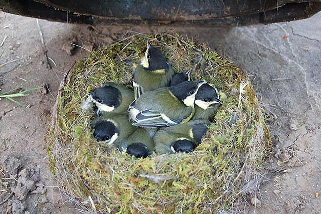 Baby Birds Born In Dirt