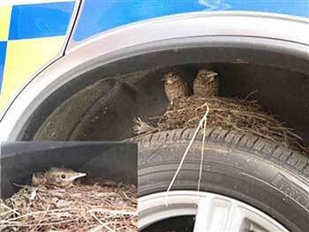 Baby Birds Born On Tire