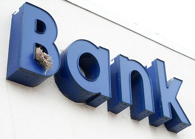 Baby Birds In Bank Sign