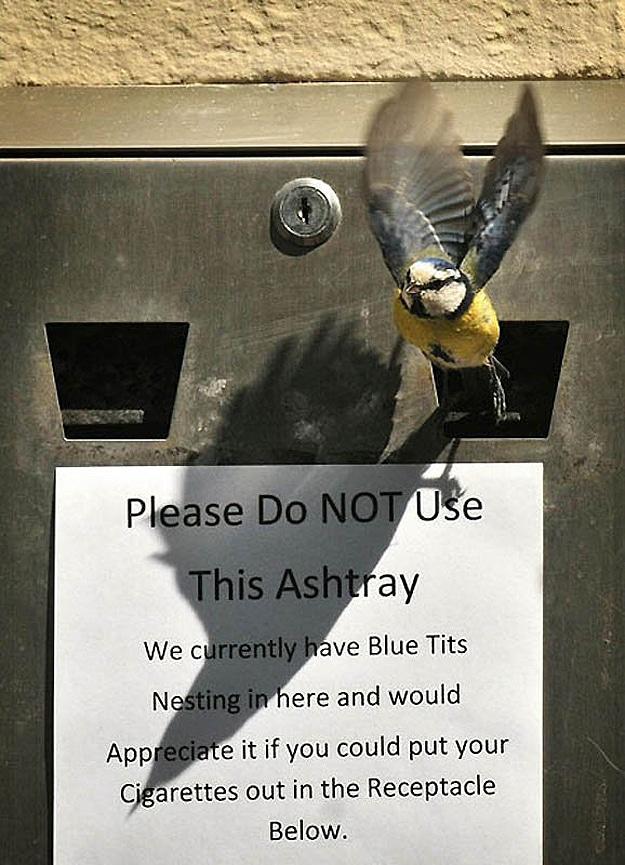 Baby Birds In Public Ashtray