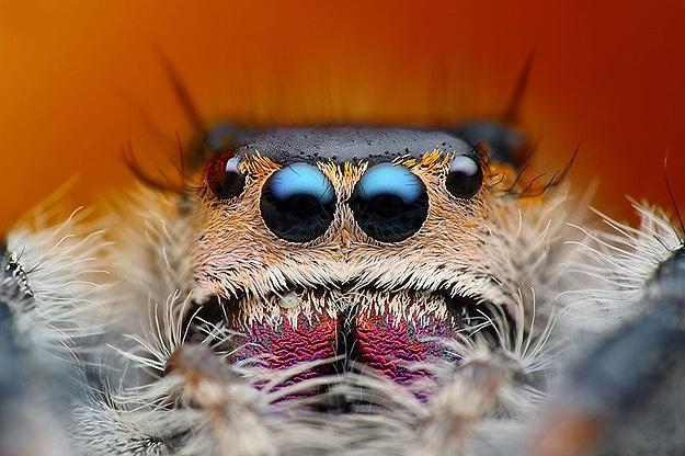 Macrophotography Tomas Rak Bugs