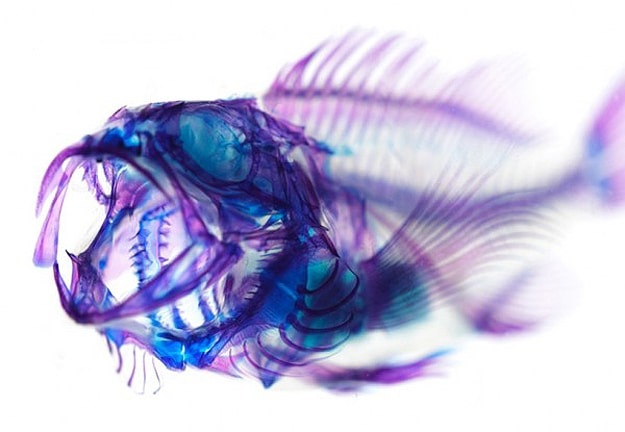Fish and Science Meet Art