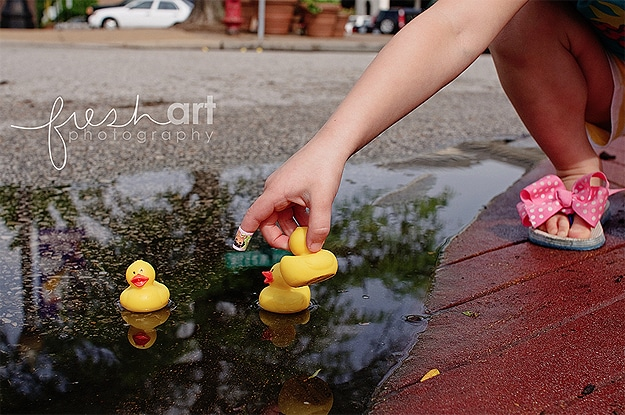 Yellow Rubber Duck In Puddles